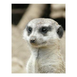 Meerkat Personalized Flyer