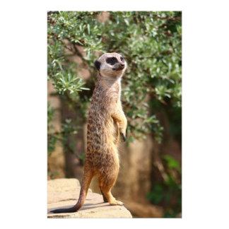 """Meerkat 5.5"""" X 8.5"""" Flyer"""