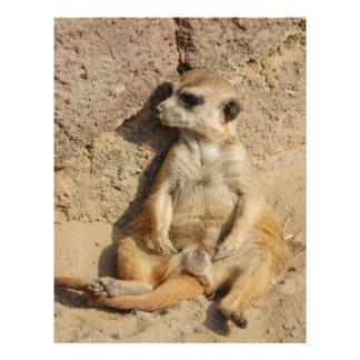 Meerkat Flyers