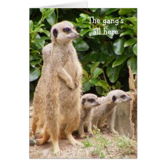 Meerkat gang birthday card