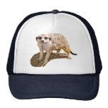 Meerkat Gift