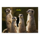 Meerkat group Hello! Card