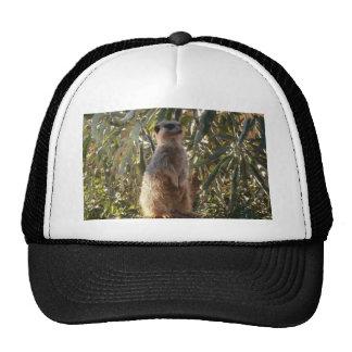 Meerkat_Guard _ Trucker Hats