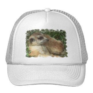 Meerkat Habitat Baseball Hat