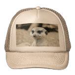 Meerkat Hats