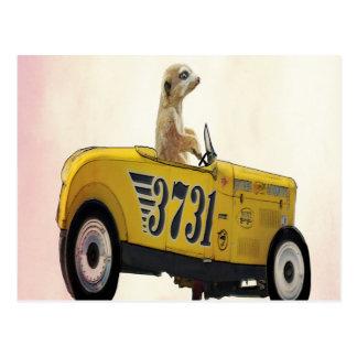 Meerkat in Hot Rod 3 Postcard