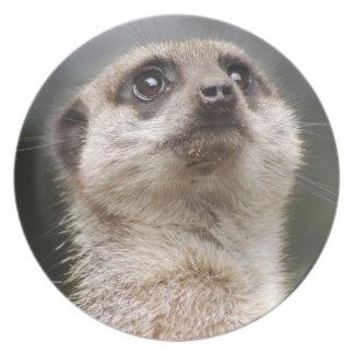 Meerkat Lemur Plate