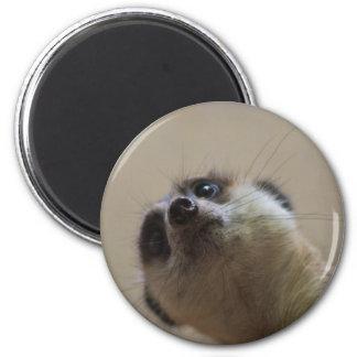 Meerkat Looking Dramatic 6 Cm Round Magnet