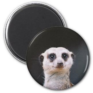 Meerkat Lookout 6 Cm Round Magnet