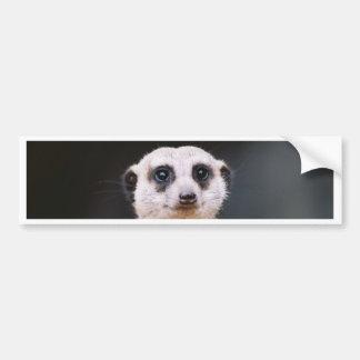 Meerkat Lookout Bumper sticker