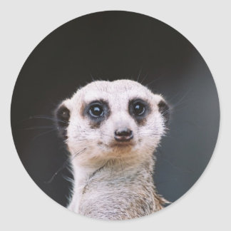 Meerkat Lookout round sticker