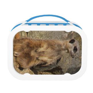 Meerkat Lunch Box