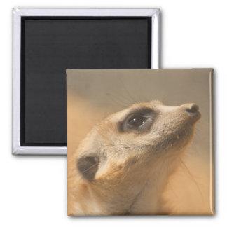 Meerkat Refrigerator Magnets
