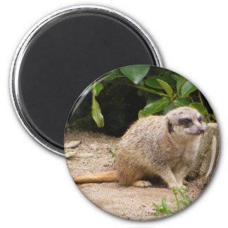 meerkat magnet3 6 cm round magnet