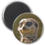 Meerkat Magnet c
