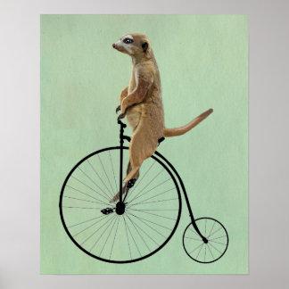 Meerkat on Black Penny Farthing Poster