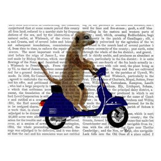 Meerkat on Dark Blue Moped Postcard