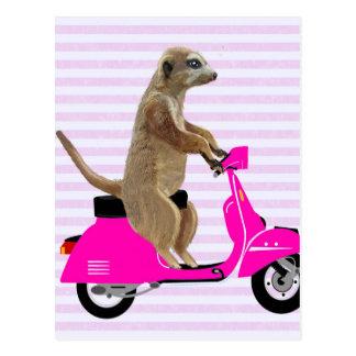 Meerkat on Pink Moped 2 Postcard