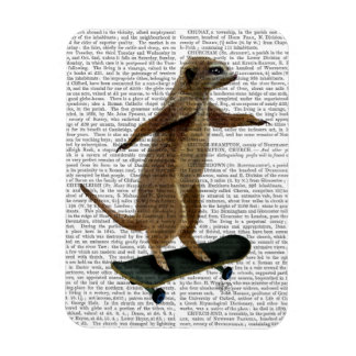 Meerkat On Skateboard 2 Magnet