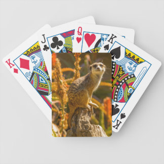 Meerkat on stump bicycle playing cards