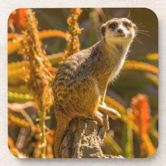 Meerkat on stump coaster