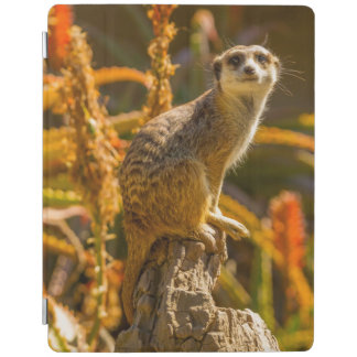 Meerkat on stump iPad cover