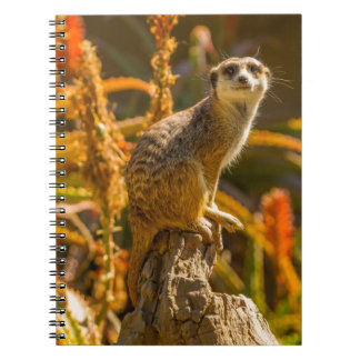 Meerkat on stump notebook