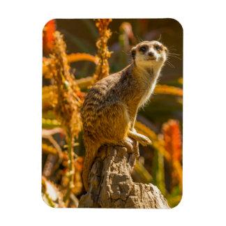 Meerkat on stump rectangular photo magnet