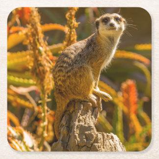 Meerkat on stump square paper coaster