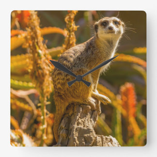 Meerkat on stump square wall clock
