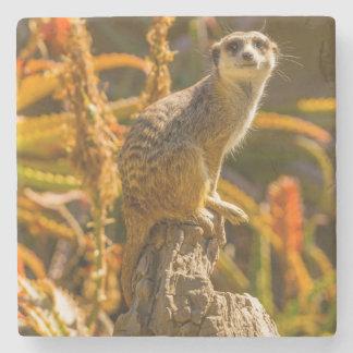 Meerkat on stump stone coaster