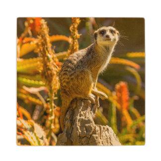 Meerkat on stump wood coaster