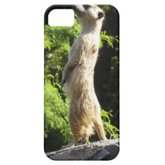 Meerkat- On The Watch iPhone 5 Cover
