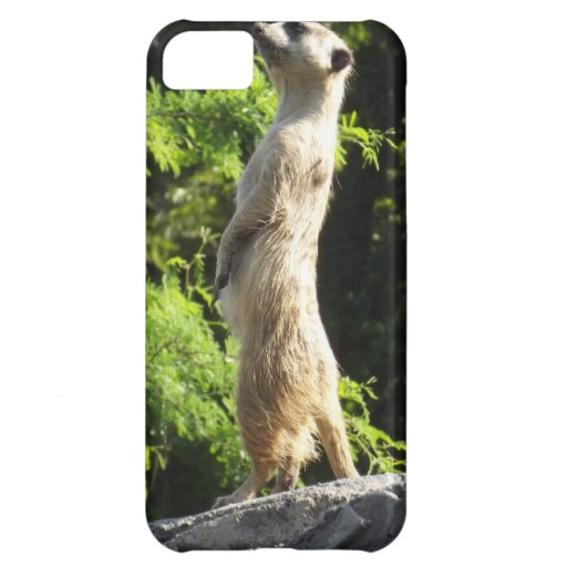 Meerkat- On The Watch iPhone 5C Covers