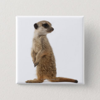 Meerkat or Suricate - Suricata suricatta 15 Cm Square Badge
