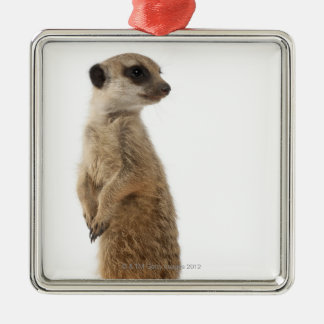 Meerkat or Suricate - Suricata suricatta Christmas Ornament