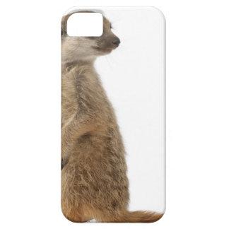 Meerkat or Suricate - Suricata suricatta iPhone 5 Covers