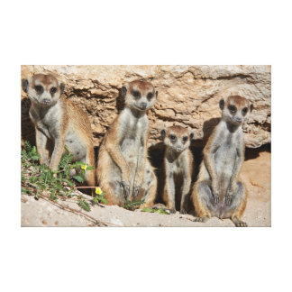 meerkat or suricate, Suricata suricatta Kalahari Canvas Print