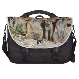 meerkat or suricate, Suricata suricatta Kalahari Bags For Laptop