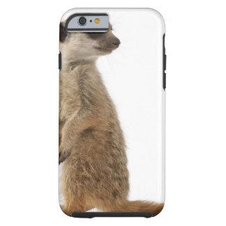 Meerkat or Suricate - Suricata suricatta Tough iPhone 6 Case