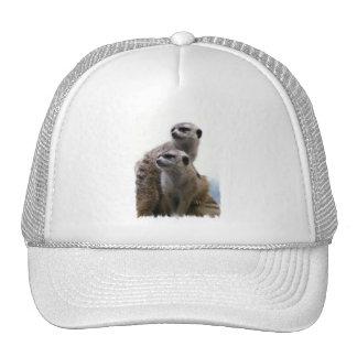 Meerkat Pair Baseball Hat