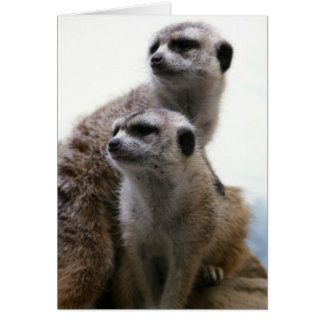 Meerkat Pair Greeting Card