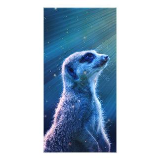 Meerkat Photo Card