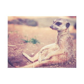 Meerkat Photograph Canvas Print