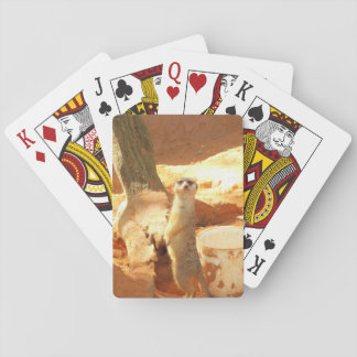 Meerkat Playing Cards