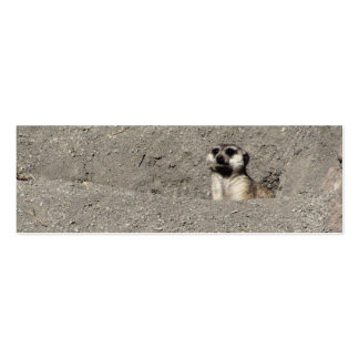 Meerkat popping out photograph pack of skinny business cards