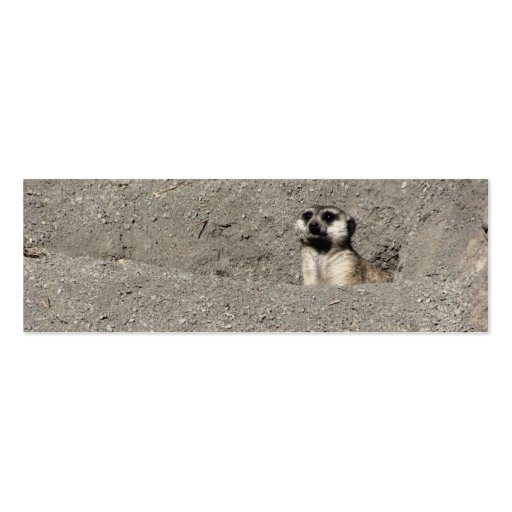 Meerkat popping out photograph business card