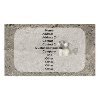 Meerkat popping out photograph pack of standard business cards