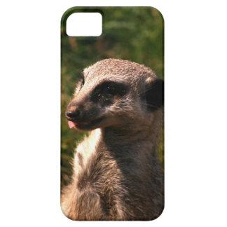 Meerkat portrait shot on a phone case. iPhone 5 case