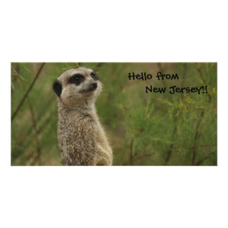 Meerkat says Hello from New Jersey Photo Cards